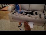 мальчишка против вредного кота)